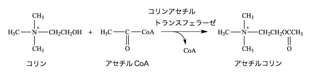 コリンエステラーゼ 阻害 薬 アセチル